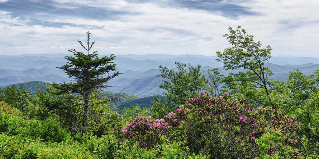 Blooms and Blossoms of Blue Ridge Parkway